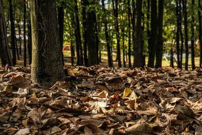 jesen, lišće, park, šuma