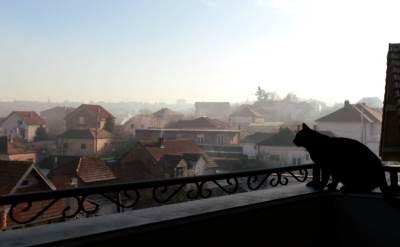 zima, grejanje, mahla, hladno, jutro, dimnjak, ogrev, mačka