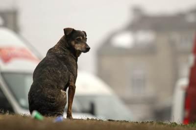 pas, magla, smog, zagađen vazduh