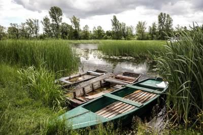 čamac, reka, zasavica, priroda,