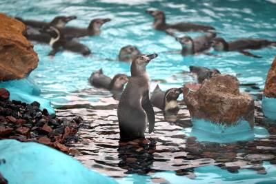 pingvin, pingvini, zoo vrt