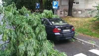 automobil, nevreme, drvo palo na automobil