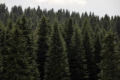 kopaonik, priroda, planina, šuma